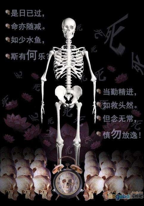 【戒友网】2.白骨观图片系列