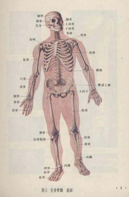 戒色遗精固腎功:固腎、叩齒、鳥飛式